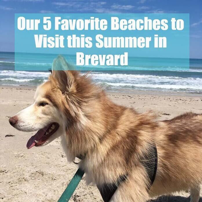 5 Favorite Beaches in Brevard