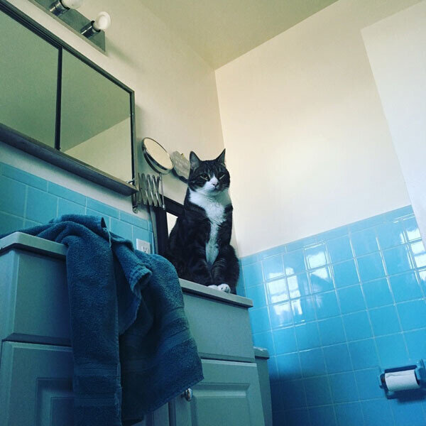 Tips for Moving with Pets_cat in a bathroom