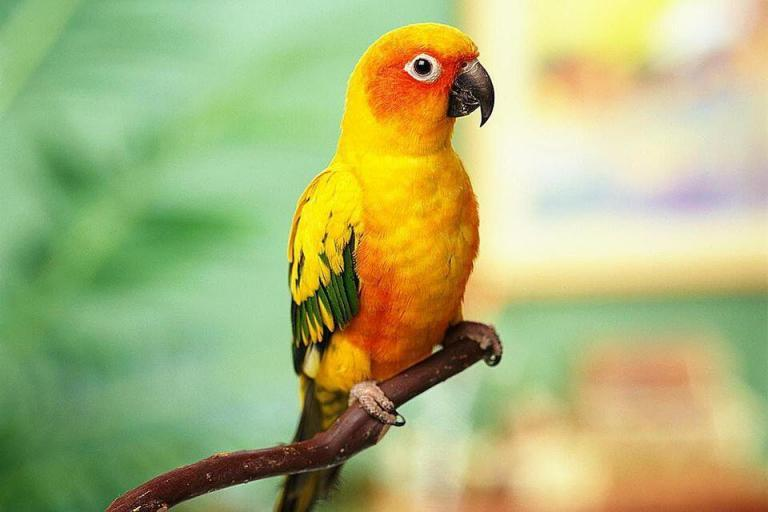 Tips for Moving with Pets_parrot