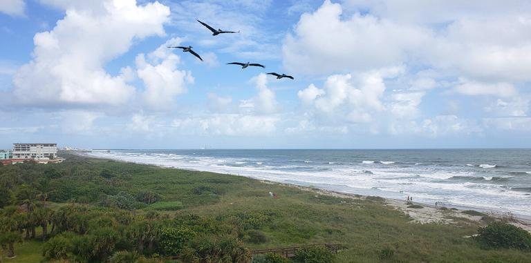 seagulls from oceanfront condo balcony
